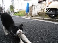 kouenji_cat.jpg